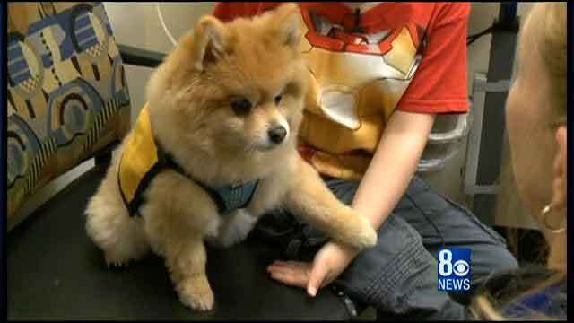 Pets Help Cancer Patients: Swoosh on the job!