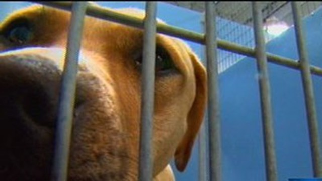 Animal Foundation full, urges postponing pet drop-offs