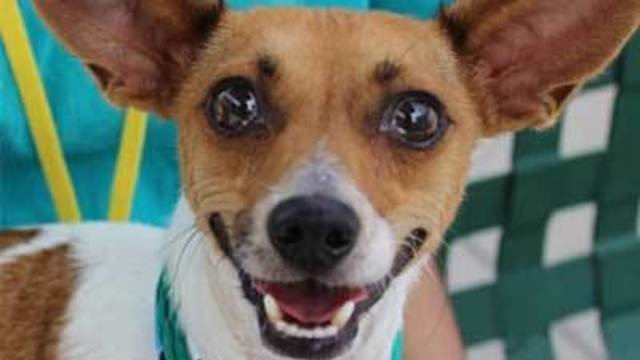 Animal Foundation waives adoption fees for all dogs