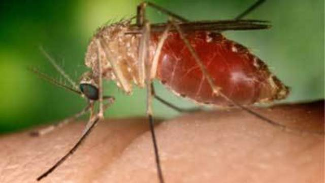 Health district: First human case of West Nile in Clark County