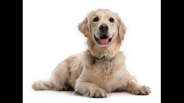 Pets Battling Cancer Can Join Clinical Trials Too