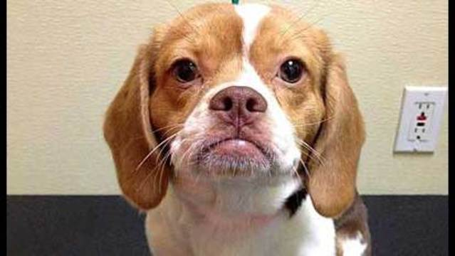 Judge Signs Restraining Order, Puppy Raffle on Hold