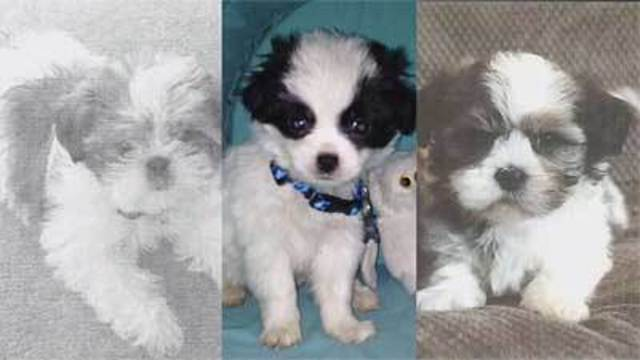 I-Team: Puppy seller confronted over selling 'sick' puppies