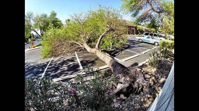 Strong winds topple trees, leave mess behind
