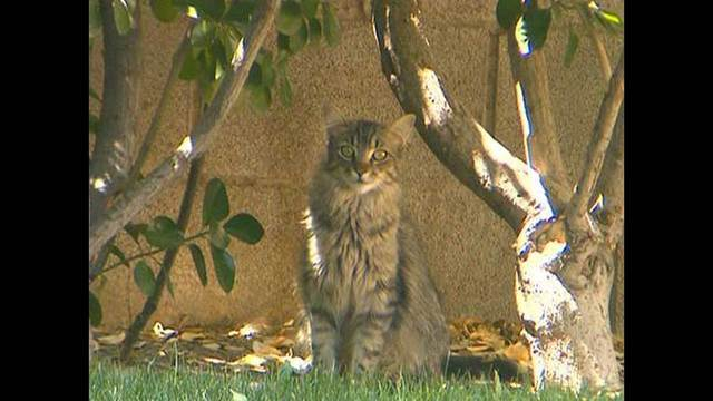 Neighborhoods helping to control feral cat population