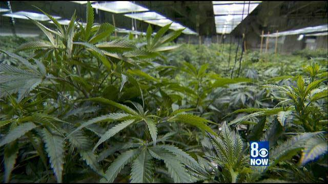 County begins 3-day marathon on medical marijuana hearings