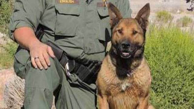Officer: 'Blanket of bees' killed police dog
