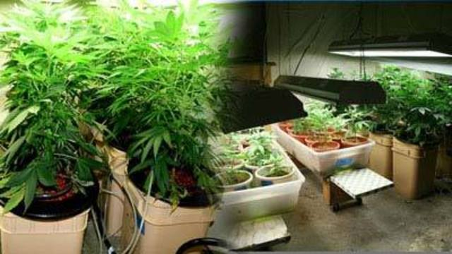 County approves dozens of medical pot growers