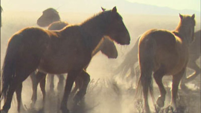 BLM: No money, room for more mustang roundups