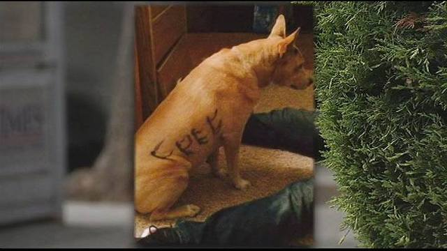 Dog marked with 'I need a home' finds one