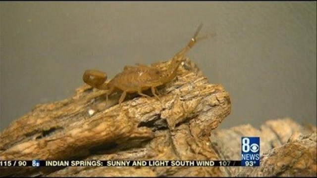 Hot weather brings summer pests