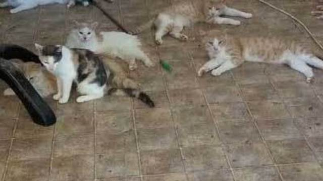 112 cats, dog rescued from North Las Vegas home