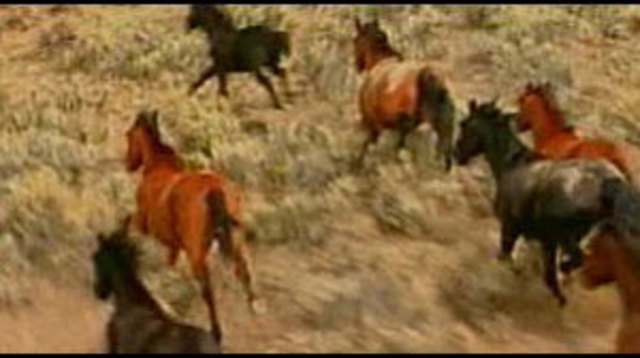 BLM Agrees to Study Pickens' Wild Horse Sanctuary