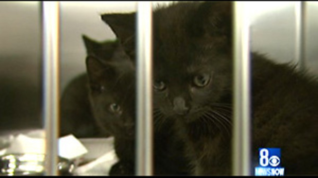 Kitten Population Explodes to Record Numbers