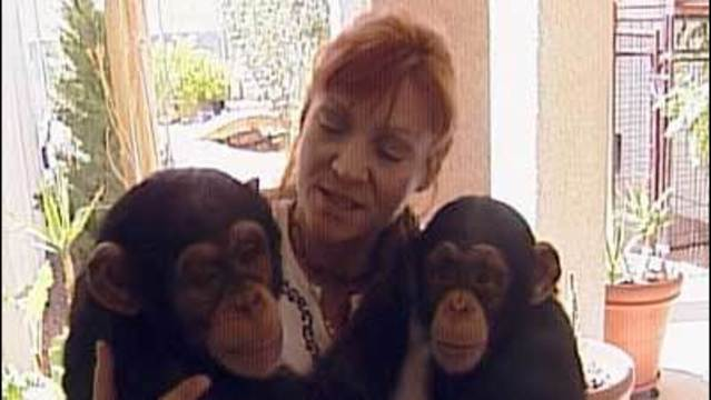 I-Team: 8 News NOW First Reported on Chimps in 2002