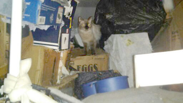 Man Arrested on Animal Violations in Hoarding Case