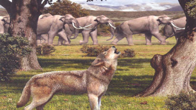 UNLV Announces Discovery of Prehistoric Wolf