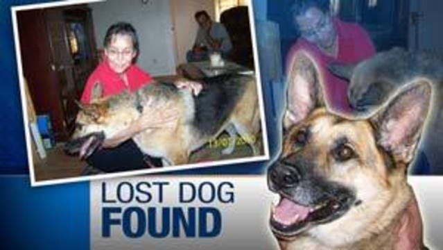 Family Reunites with Missing Dog in Las Vegas