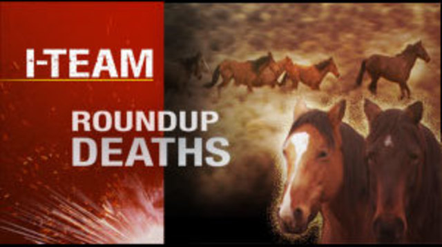 I-Team: More Horses Die in Gather, Public Not Allowed to Observe