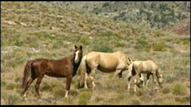Group Proposes Turning to Wild Horses for Food