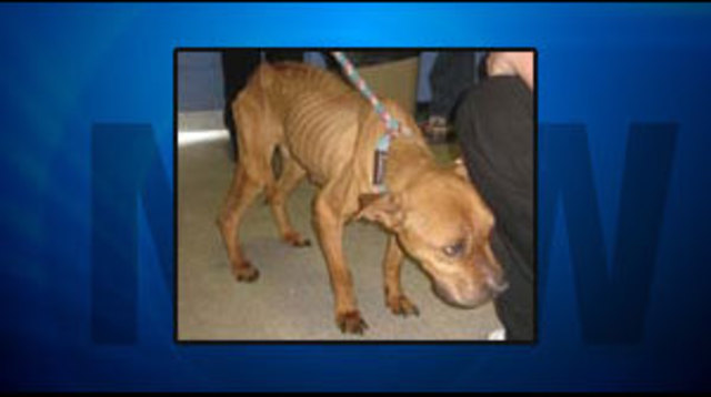 Starving Dog Makes Cross Country Trip to Las Vegas