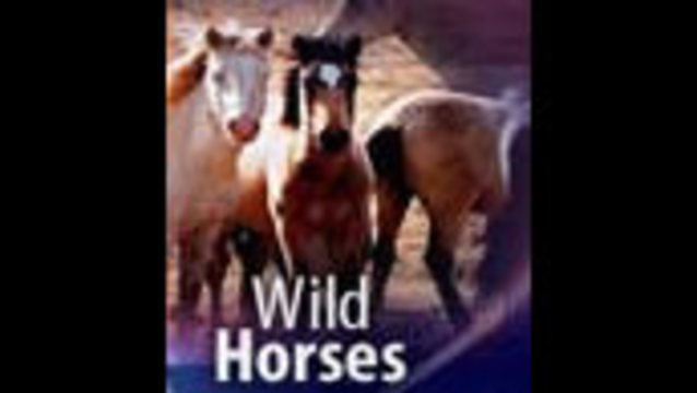 Six Wild Horses Slaughtered After Sale