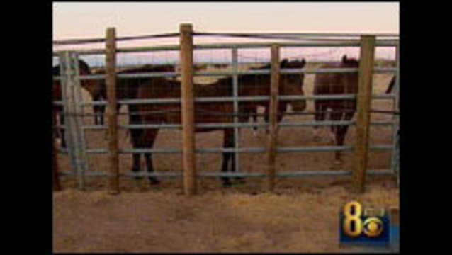 New Motion Filed to Stop BLM's Wild Horse Round Up