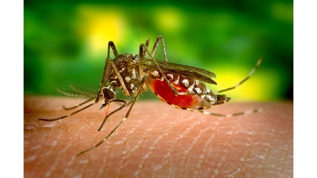MI  confirms its 1st West Nile virus activity of 2017