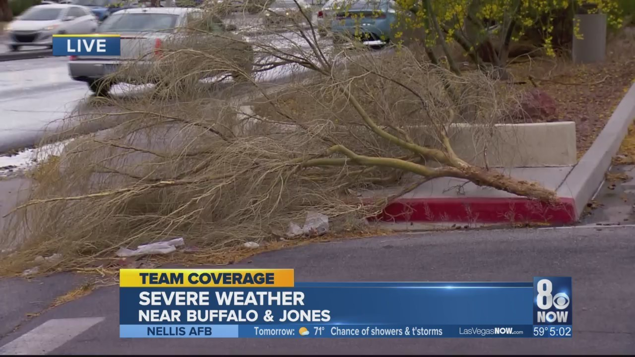 Rainy weather hits Vegas, lightning strikes tree in valley