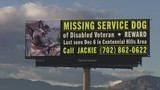 Search for missing service dog continues after owner's unfortunate death